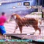 Menino foi atacado tentar tocar tigre (Reprodução)