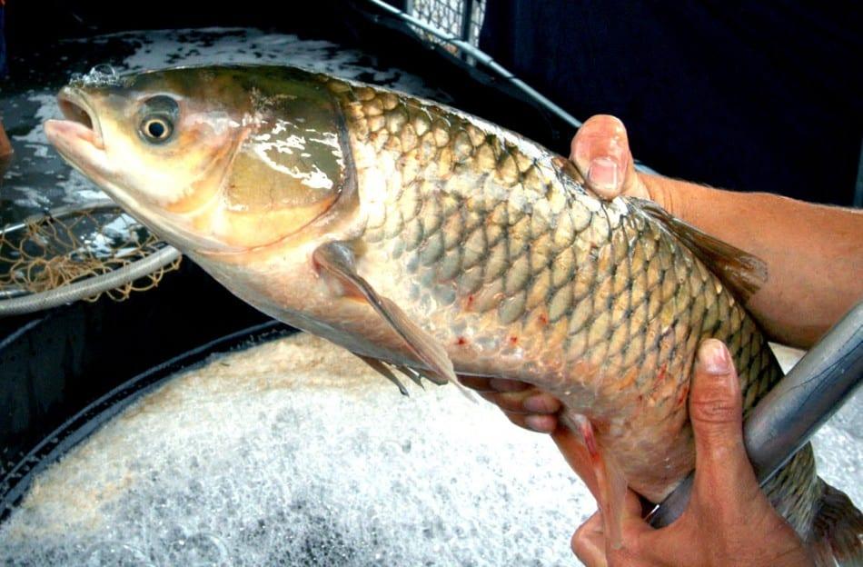 Feira do peixe vivo acontece no sábado (13) (Marcelo Martins)