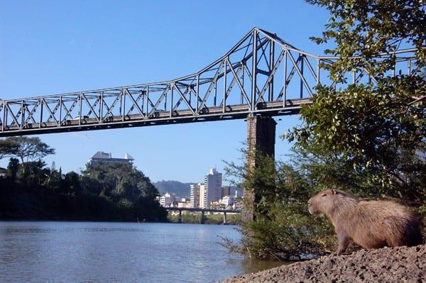 Ponte de Ferro (Eraldo Schnaider)
