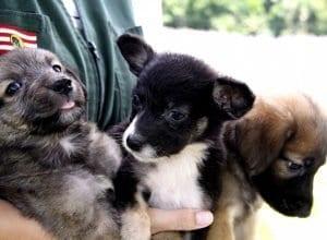 Desde janeiro, 186 gatos e 176 cachorros passaram por esterilização cirúrgica na unidade - foto de Marcelo Martins