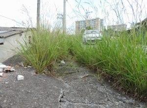 Prefeitura está notificando proprietários para roçarem os terrenos (Jaime Batista)