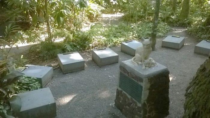 Cemitério de Gatos de Edith Gaertner (Flávia Madrigano)