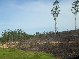 Incêndio florestal controlado pelo Corpo de Bombeiros Militar