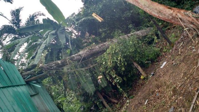 Árvore cai em residência no bairro Asilo (CBM)