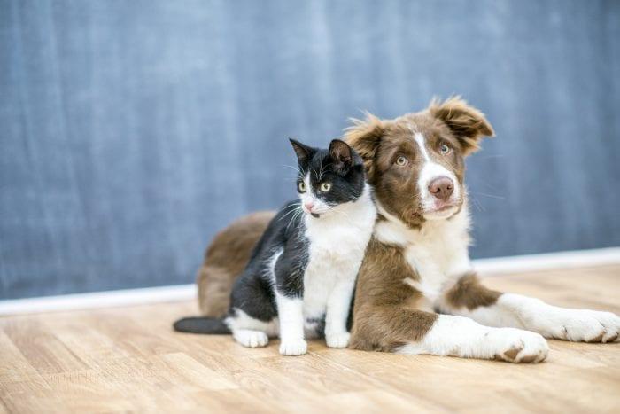 Feira de adoção de cães e gatos no Neumarkt
