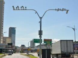 Câmeras vão permitir a leitura das placas dos veículos - Michele Lamin