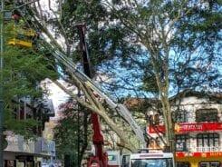 Remoção de árvore na Rua XV de Novembro - foto de Túlio Marcelo Ramos