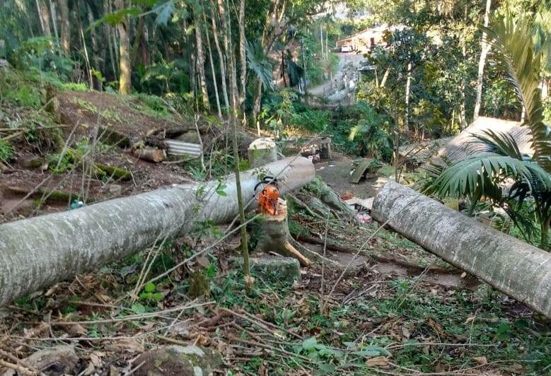Árvore cai sob dois homens no bairro Badenfurt - foto do Corpo de Bombeiros